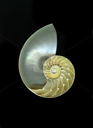 Chambered Nautilus stock photo, Detailed close-up view of chambered nautilus isolated on black background by Christian Slanec