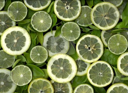 Lemon and Lime stock photo, Fresh organic colorful slices of lemons and limes by Christian Slanec