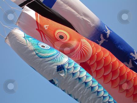 Japanese Koi nobori stock photo, Japanese carp banners flying in the wind by Paul Malandain