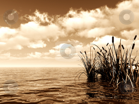 Clouds stock photo, Reed at water and cloudy sky - 3d illustration banner by J?