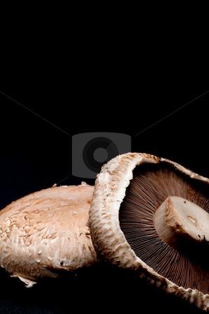 Vertical close up of portabella mushroom caps on black stock photo, Vertical close up of portabella mushroom caps on black by Vince Clements