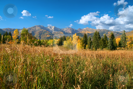 Mountain Meadow stock photo, Fall colors on a high mountain meadow with blue sky and clouds by Mark Smith