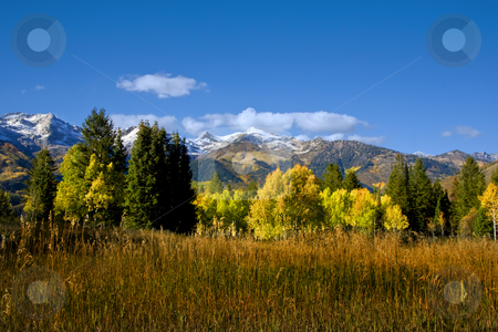 Fall stock photo, Fall colors on a high mountain meadow with blue sky and clouds by Mark Smith