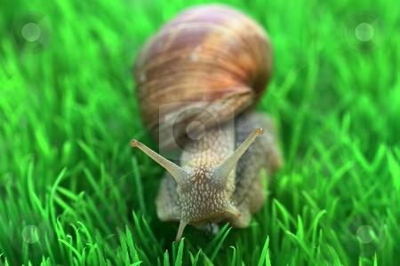 Snail stock photo, Snail with shell on green background by Birgit Reitz-Hofmann