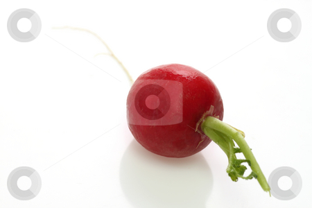 Radish stock photo, ONe fresh radish on white background by Birgit Reitz-Hofmann