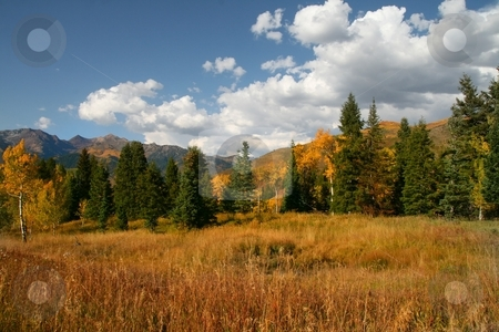 Fall Colors stock photo, Fall colors on a high mountain meadow with blue sky and clouds by Mark Smith