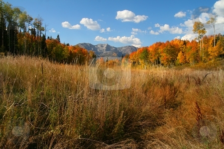 Fall Slender stock photo, Fall shot of trees in the autumn showing  bright fall colors by Mark Smith