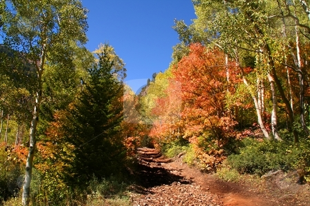 Fall Splender 67 stock photo, High mountain road in the fall showing all the fall colors by Mark Smith