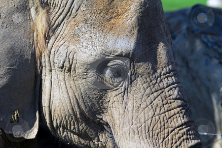 Elephant stock photo, Close-up portrait of a big African elephant by Alain Turgeon