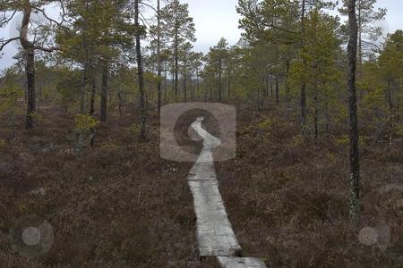 Wooden pathway stock photo,  by Turo Jantunen