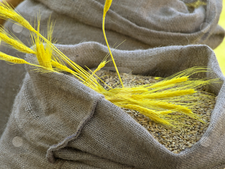 Grain stock photo, Sacks of grain with yellow head on it by Sergej Razvodovskij