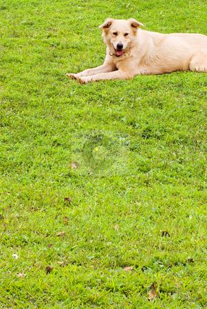 Puppy on soft grassland stock photo, Relax puppy on soft grassland by Lawren