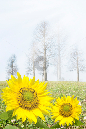 Spring is coming stock photo, After the cold winter, spring is coming by Lawren