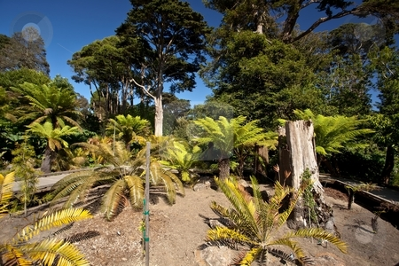 SF Botanical Garden stock photo, San Francisco Botanical Garden (formerly Strybing Arboretum) is a large botanical garden in San Francisco's Golden Gate Park. by Mariusz Jurgielewicz