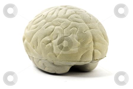 Brain stock photo, Model brain, isolated on white by Arek Rainczuk