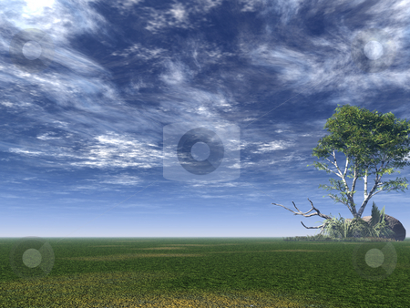 Birch stock photo, Lonely birch on a green field - 3d illustration by J?