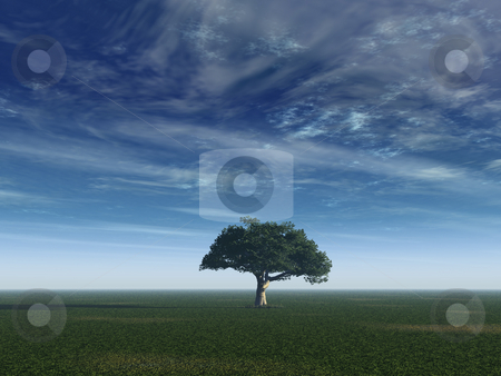 Peaceful stock photo, Lonely tree on a field with blue sky - 3d illustration by J?