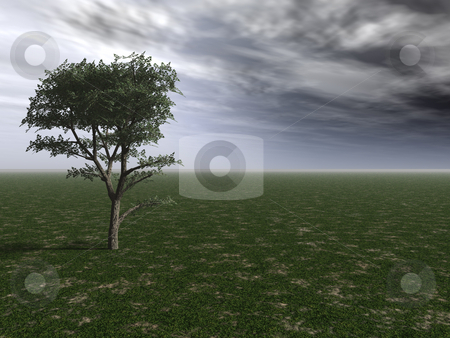 Before the storm stock photo, Lonely tree and a cloudy sky - 3d illustration by J?