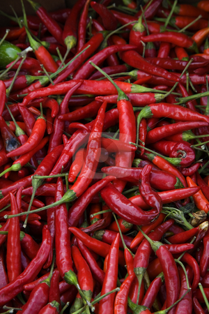 Red Cayenne Chili Peppers stock photo, Spicy Hot Red Cayenne Chili Peppers by William Perry