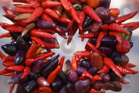 Round Red Purple Chili Peppers Wreath stock photo, Round Red Spicy Hot Chili Peppers Wreath by William Perry