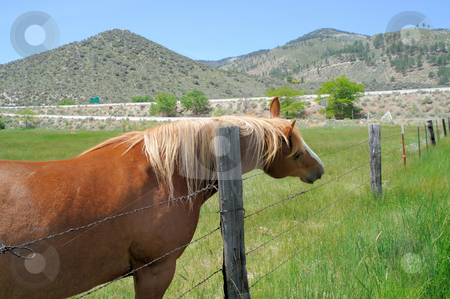 Horse With An Itch stock photo, A brown horse with a blonde maine uses a wooden fence post to scratch its neck in the high desert of Nevada by Lynn Bendickson