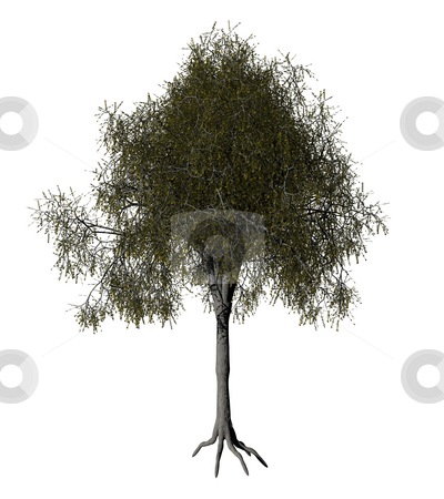 Tree stock photo, iolated tree on white background - 3d illustration by J?