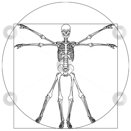 Skeleton stock photo, Davinci skeleton by J?