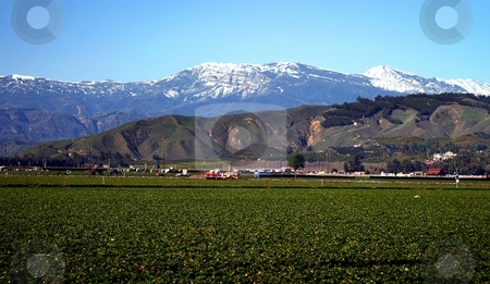 Strawberry Field stock photo, View of a strawberry field with snow montains in the background. by Henrik Lehnerer