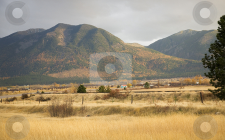 Farm Yellow Aspens in the Hills Fall Colors and Yellow Grass Mis stock photo, Farm Hills with Yellow Aspens Fall Colors and Yellow Grass Barbed Wire Fence Missoula Montana by William Perry