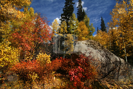 Fall Splender stock photo, Fall shot of trees in the autumn showing  bright fall colors by Mark Smith