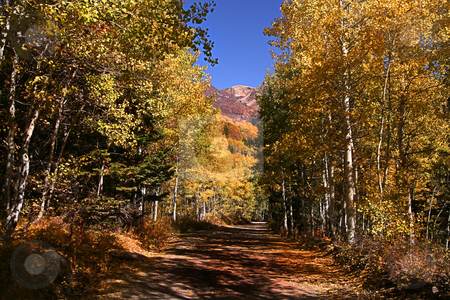 Fall Splender stock photo, High mountain road in the fall showing all the fall colors by Mark Smith
