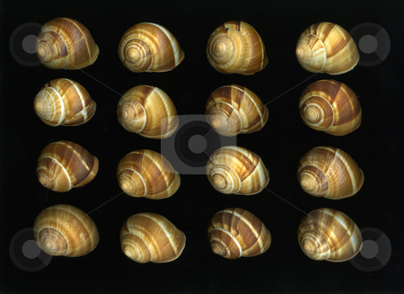 Escargot stock photo, Many fresh organic escargot shells isolated on black background by Christian Slanec