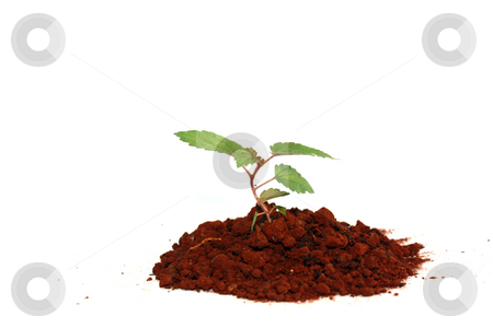 New plant stock photo, A new plant by Nurul Huda