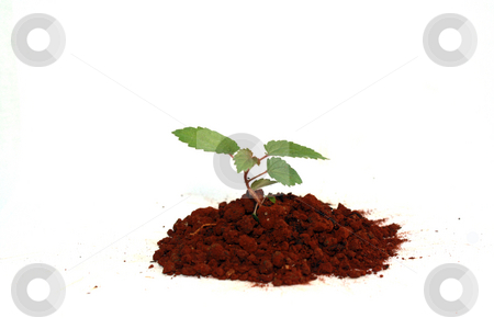 New plant stock photo, A new plant by Nurul Huda