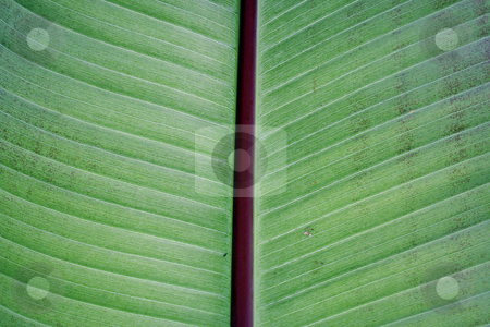 Plant Background stock photo, A nice plant pattern for a background. by Brandon Seidel