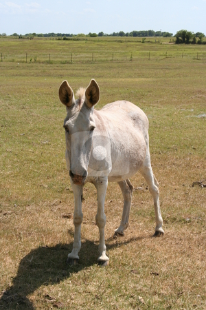 Donkey stock photo, A donkey on a farm by Brandon Seidel