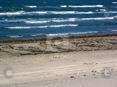 Beachfront stock photo, Unmaintained but pretty beachfront property by Brandon Seidel