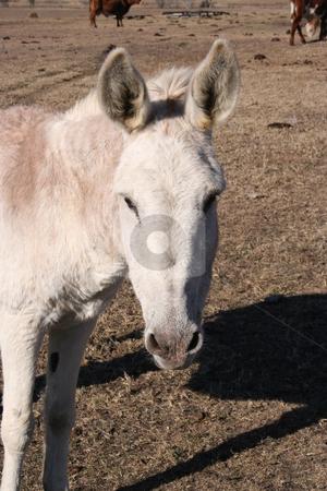 Donkey stock photo, A donkey on a farm. by Brandon Seidel