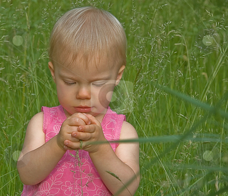 Toddler Girl in Tall Grass stock photo, This cute toddler Caucasian girl is playing in the tall grass and has a stalk grasped in her closed fists. by Valerie Garner