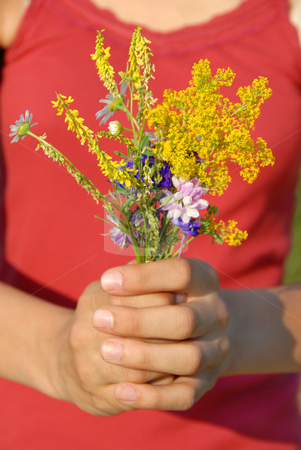 Summer flowers bouquet stock photo, Various summer field flowers bouquet in girl hands by Julija Sapic