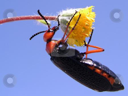 Pollinate stock photo,  by Ryan Dandy