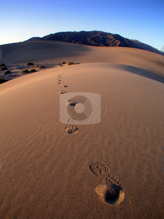 Sand Dune Footsteps stock photo,  by Ryan Dandy