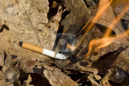 Cigarette burning leaves stock photo, Cigarette lighting leaves on fire by Chris Roselli