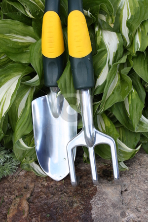Garden Tools stock photo, Gardening tools for planting or transplanting with a Hosta plant in  background by Dee Boldrick