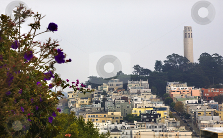 Coit Tower Flowers San Francisco California stock photo, Coit Tower Neighborhood San Francisco California by William Perry