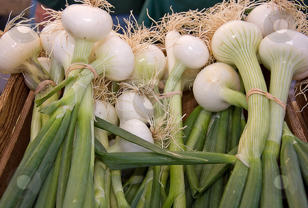 Bundles of White Onions stock photo, Bundles of white onions are banded together with rubber bands in a wooden crate. by Valerie Garner