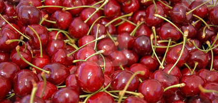 Many Red, Ripe Cherries stock photo, Many large juicy red, ripe cherries with stems are in this photo. by Valerie Garner