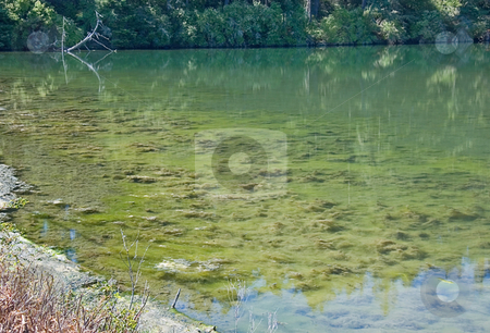 Beautiful Lagoon stock photo, This beautiful lagoon has deep greenish hues to the water with trees in the background.  The shallow water is very clear with various plant growth and tiny fish. by Valerie Garner