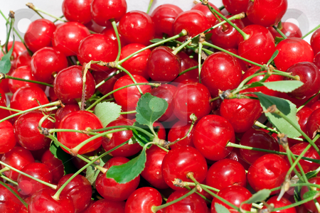 Ciliegie amarene stock photo, A group of ripe sour cherries under the sun by ANTONIO SCARPI