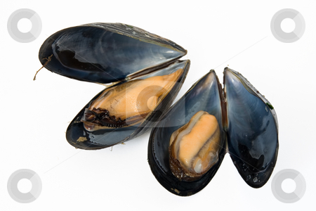 Two boiled mussels stock photo, Close up of fresh boiled mussels isolated on white background by ANTONIO SCARPI